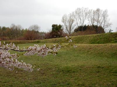 名残を惜しむ桜と土塁