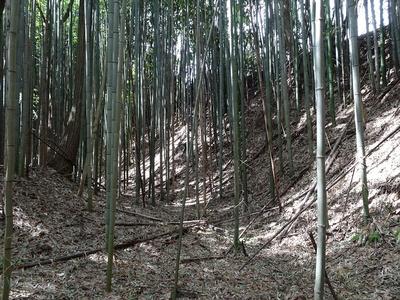 空堀...と言うべきか竹藪と言うべきか