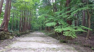 緑々の石段