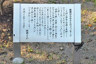 綾瀬はるかさんのメッセージ