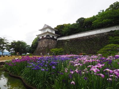 板敷櫓と花菖蒲