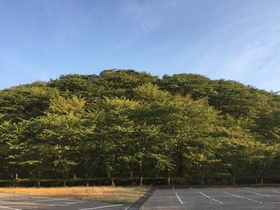 高尾城ジョウヤマ部分全景