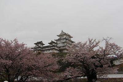 雨の桜と天守