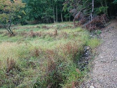 林小城 山裾の湿地帯