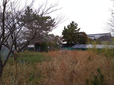 本曲輪(南東から正法寺を望む)