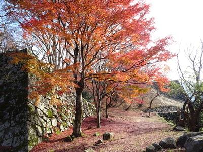 天守台石垣と紅葉