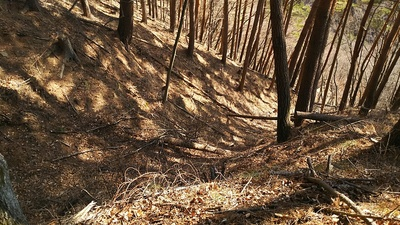 本丸跡から5本目の竪堀を4本目の堀切から見る