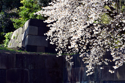 桜と中雀門