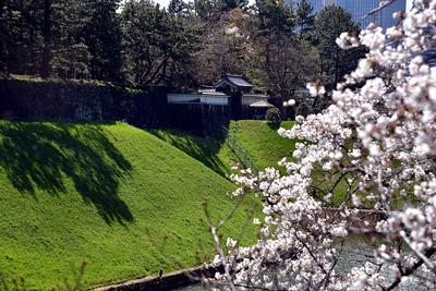桜と半蔵門
