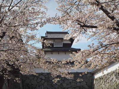 桜と潮見櫓
