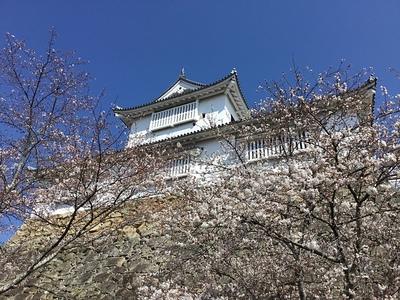 二の丸より桜と備中櫓