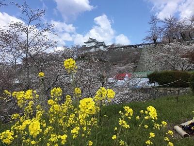 黄、桜、白、青