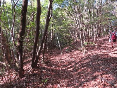 茶臼ケ森周辺北側尾根の横堀
