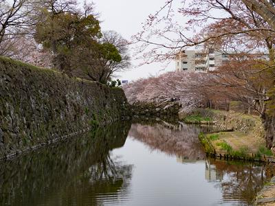 姫路城 内堀(西側)と石垣と桜
