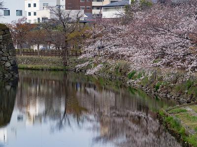姫路城 内堀(西側)と桜