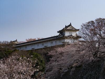 姫路城 ワの櫓と桜