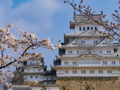 姫路城 控えめに、桜