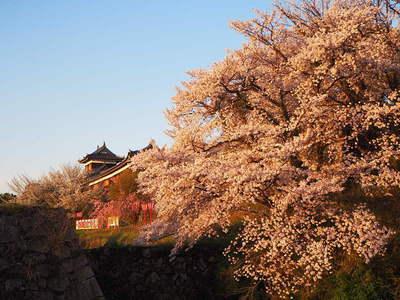 朝日を浴びて◆満開桜と追手東隅櫓