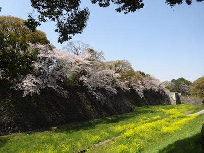 春の二之丸の風景
