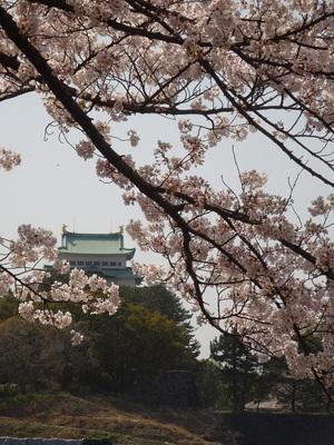 桜と天守其の壱