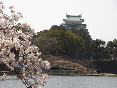 桜と天守其の弐