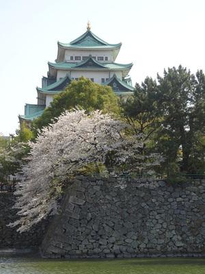 桜と天守其の伍