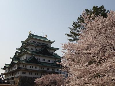 城内から眺める桜と天守