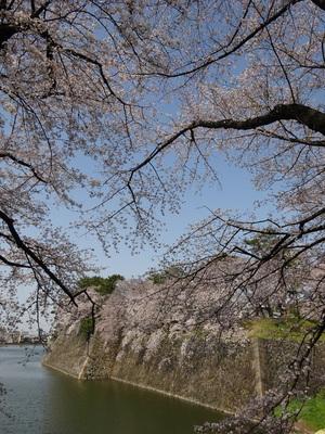 春の西之丸の風景