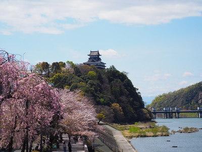 桜並木と天守遠景