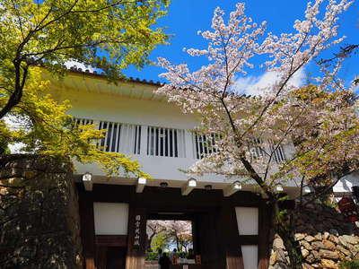 桜と本丸御門