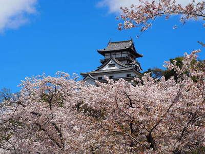 桜の雲にのる天守