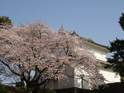 桜と東南隅櫓