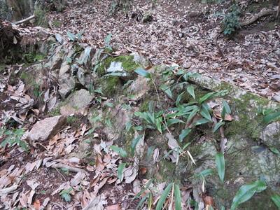 登城道の石積