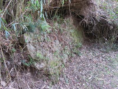 谷間から権現丸への道脇の石垣2