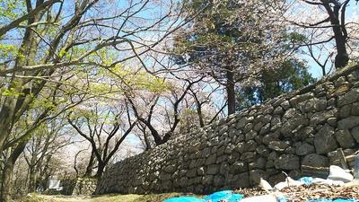四ツ門跡の石垣と桜
