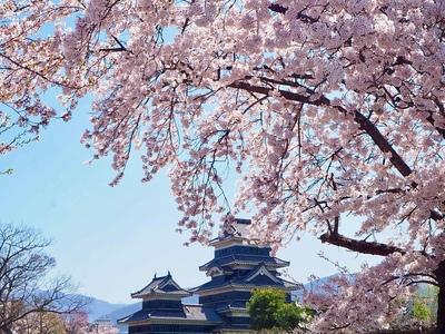 桜の波と天守