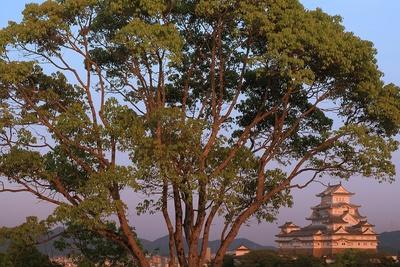 男山配水池公園からの夕景と木