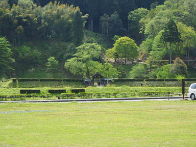 雲正寺地区から見る朝倉義景館跡