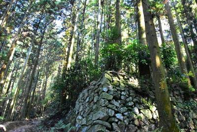 八幡口からの登山道