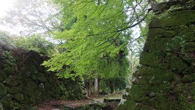 石垣と緑色のもみじ