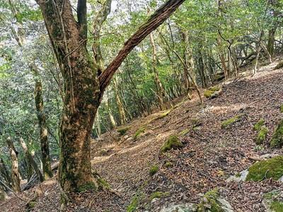 畝状竪堀(西尾根北側)