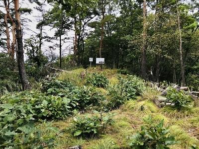 姫城の主郭(南から北方向)
