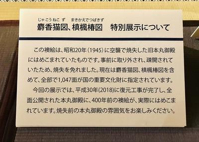 麝香猫図、槙楓椿図 特別展示について