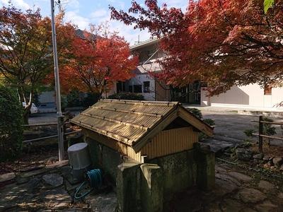 大井戸と紅葉