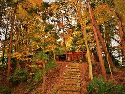 中野城 紅葉の風景