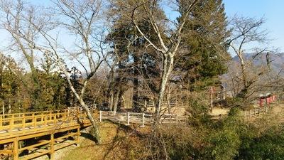 北東側見学台から主郭を見る