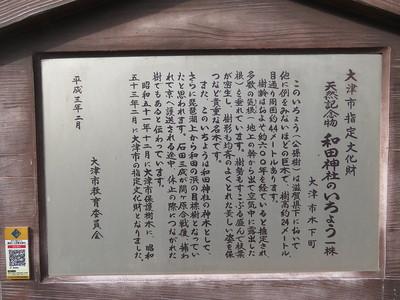 天然記念物 和田神社のいちょう一株