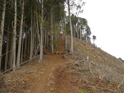 東尾根への登城道