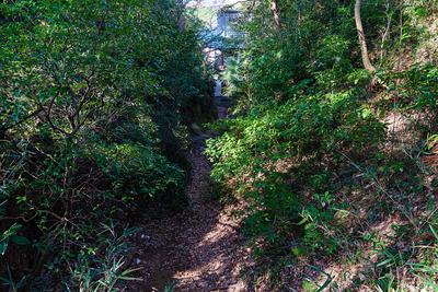 岩室観音堂の奥の竪堀(伝・搦手口)を上から
