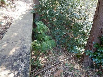 竪堀を跨ぐ橋